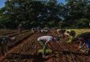 En 10 años, el mundo podría no ser capaz de producir suficientes alimentos para todo el planeta
