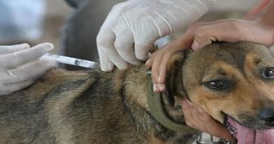 vacunacion perros