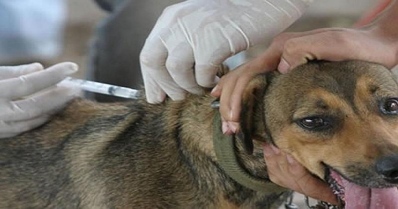 Zoonosis organiza feria  para celebrar a los canes