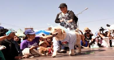 Ministra de Salud invita a la población a celebrar fiesta de San Roque con feria de vacunación gratuita de canes