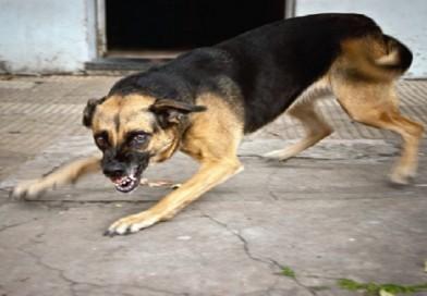 Zoonosis El Alto reporta el sexto caso de rabia canina