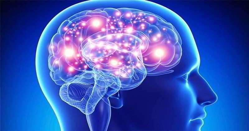 inteligencia-cerebro