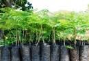 Distribuirán el sábado 20.000 plantines en seis estaciones del teleférico de La Paz y El Alto