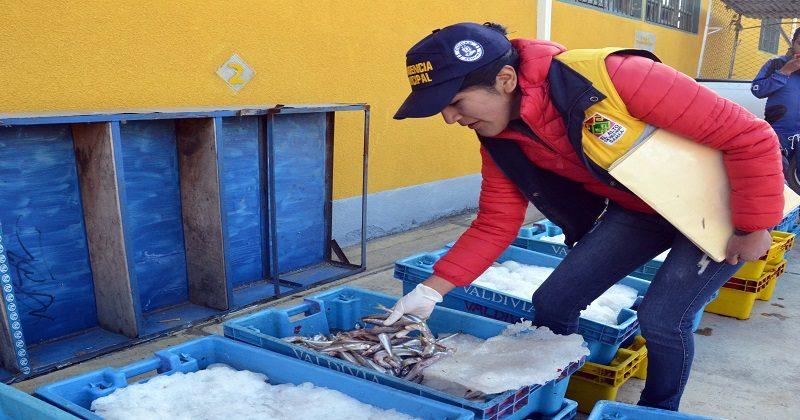 Intendencia decomisó 560 kilos de pejerrey de cola amarilla