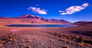 El viento lleva la vida al desierto de Atacama