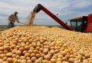 """BDP lanza crédito """"Pirwa Productiva"""" para financiar silos a 20 años plazo"""