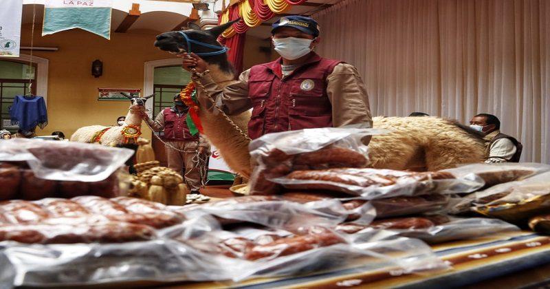 Ferias departamentales promueven la reactivación del sector ganadero en camélidos